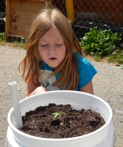 Girl watching plant growing